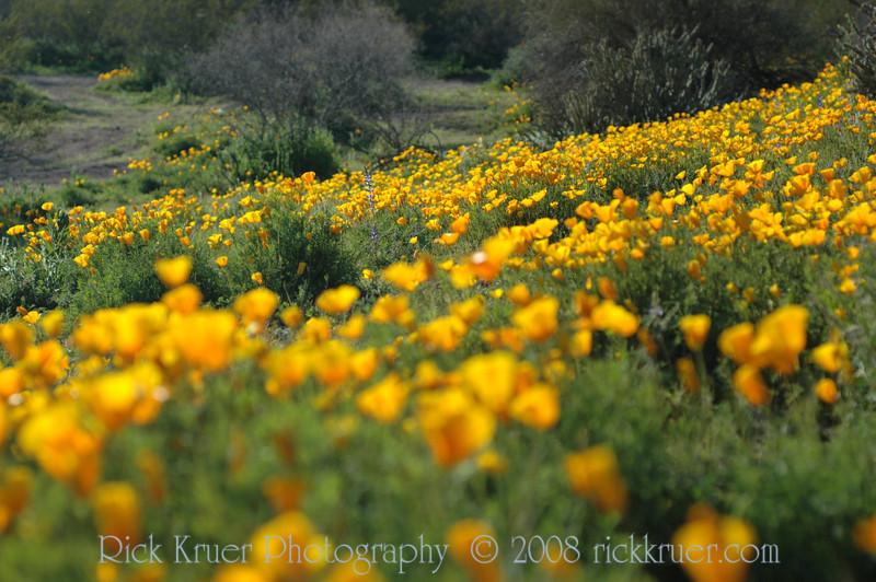 ND70_2008-03-09DSC_7544-WildflowersFar-nice