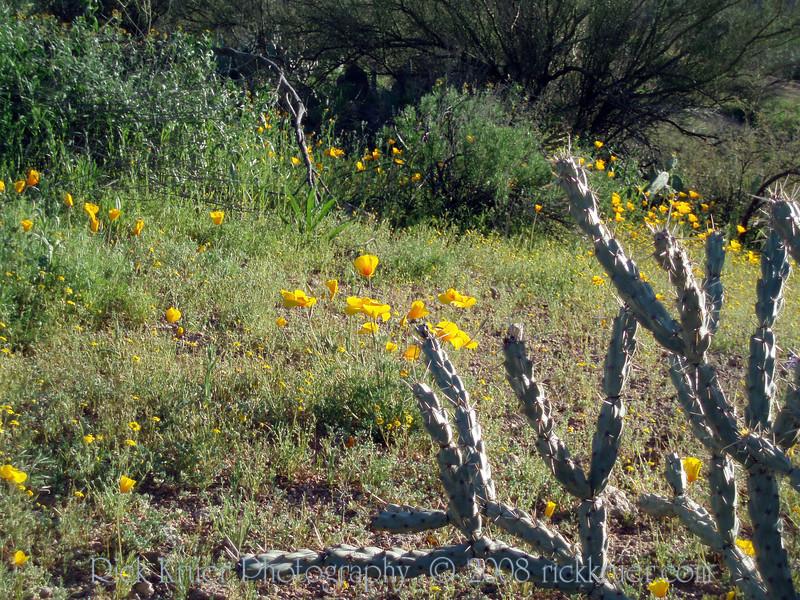 P3092697-WildflowersCloseup-niceJPG