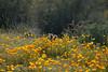 D200_2008-03-09DSC_5348-WildflowersCactusSun-nice