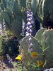 P3092685-WildflowersCactusCloseup-niceJPG