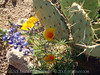 P3092683-WildflowersCactusCloseup-niceJPG