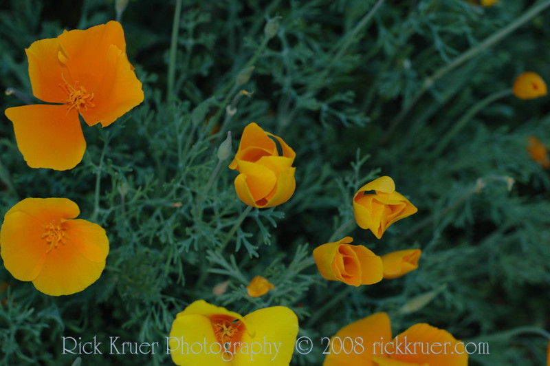 ND70_2008-03-09DSC_7599-WildflowersClosingSunset-nice
