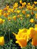 P3092706-WildflowersCloseupTall-niceJPG
