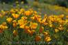 ND70_2008-03-09DSC_7547-WildflowersSunCloseup-nice
