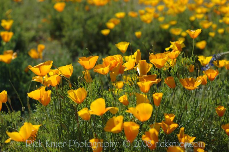 ND70_2008-03-09DSC_7548-WildflowersSunWide-nice