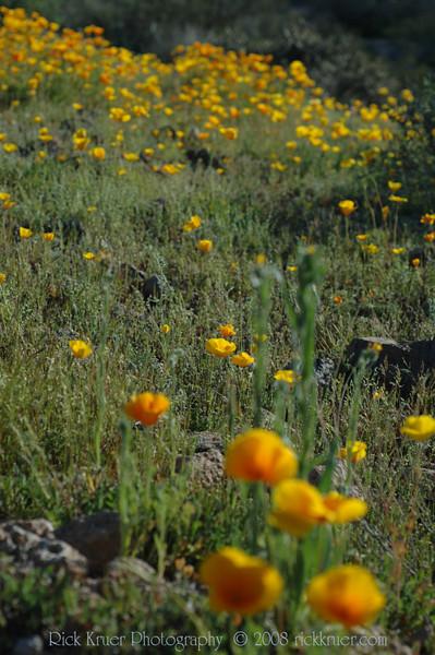 ND70_2008-03-09DSC_7574-WildflowersCloseupTall-nice