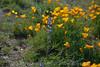 D200_2008-03-09DSC_5303-WildflowersPurpleOrangeCloseup-nice