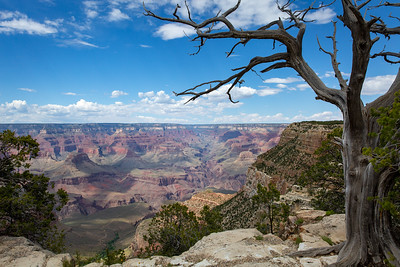 June at the Grand Canyon Three