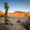 Mojave Evening