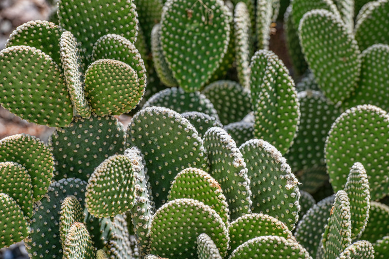 Patterns in Cactus