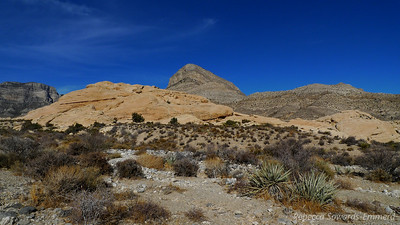 """Turtlehead peak - our goal. Around here we veered off of the quarry trail and started towards Turtlehead. All of the signs said """"2.5 miles, DIFFICULT"""" but the trail was still pretty crowded."""