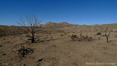Dead terrain.