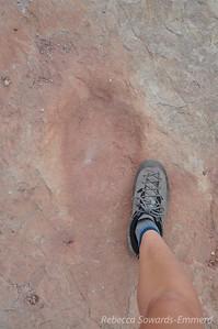 My feet are big. But not dinosaur big.
