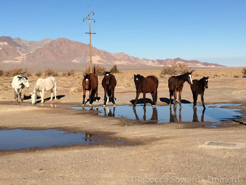 The herd.