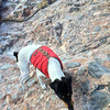 Molly was quite the climber! I think she's part mountain goat.