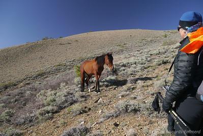 Sooz the horse whisperer!