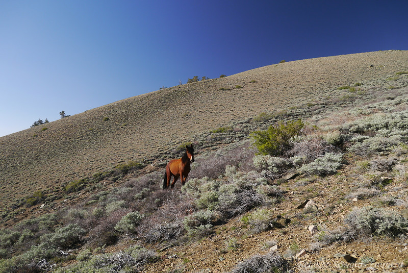 At one switchback the horse was a bit closer. We started teasing her with gentle talk of apples.