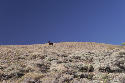 The horse had wandered over near the trail and accompanied us along the first few switchbacks.