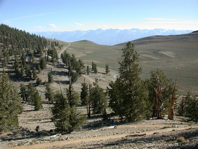 In the bristlecones, Sierra view in the hazy distance