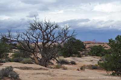 Storms in the area but we're a safe distance away. Slickrock Trail, Canyonlands National Park Needles District