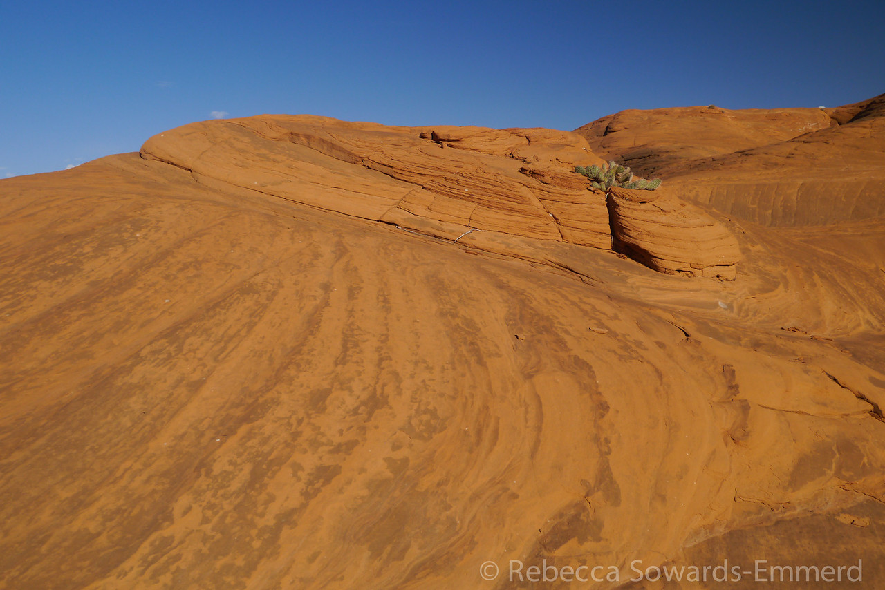 We walked around behind the rock and found a desert of more red rock.