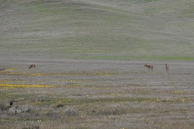 Antelope  Click to add a description...