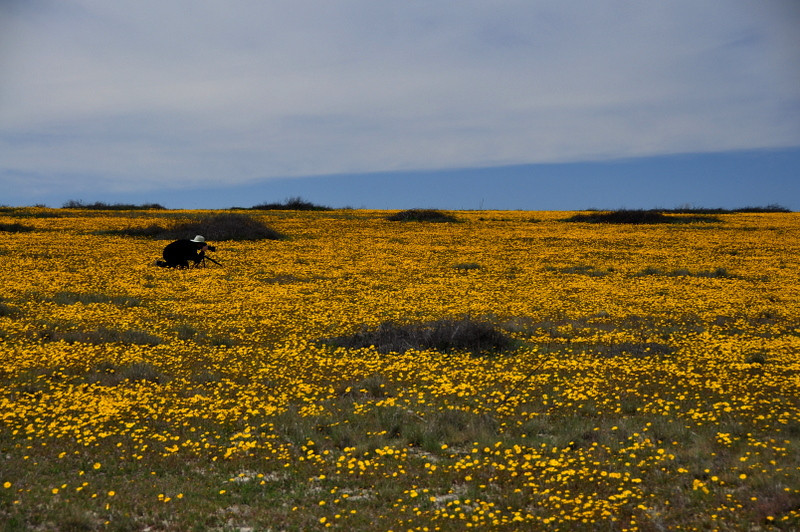 Photographer in Flowers<br /> <br /> David in the field of coreopsis
