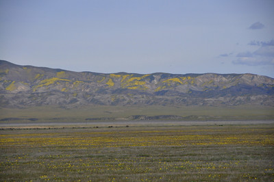 1Yellow in the Temblor Range