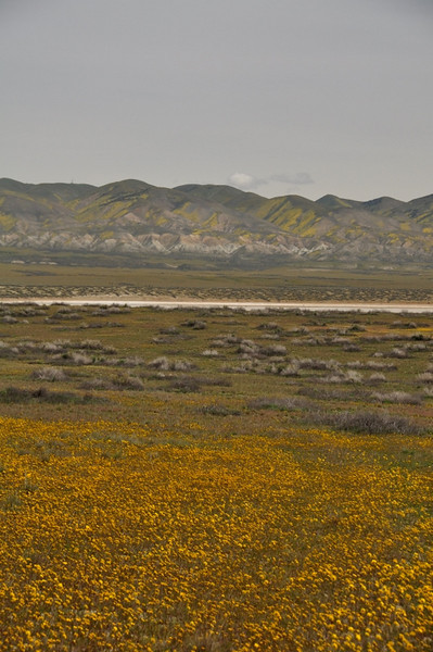 Temblor Range<br /> <br /> As we reached the south end of Soda Lake we started to see the yellow in the Temblor Range peaks