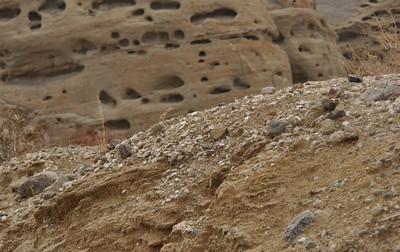 All of those white shreds are calcite.
