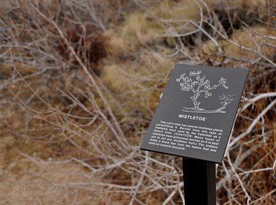 Since it was Christmas, I thought this was an appropriate sign to photograph along the interpretive trail.