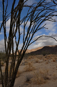 Ocotillo. This one in particular wasn't in bloom, but we saw several starting to grow their green leaves and red flowers.