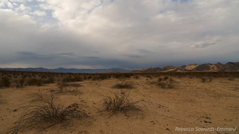 Back on the desert floor, wondering if we'll get rain today. Also, trying to avoid the critter villages I keep stepping in (sorry, desert critters! I tried my best to avoid you, but apparently I earned my new nickname of Cali-zilla or God--pidder)