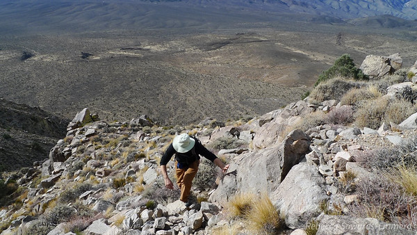 David working his way up the slope. The joshua Tree forest in the valley below us.