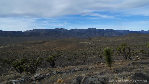 View from the Cabin. That's a pretty awesome joshua tree forest.