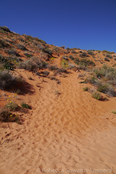 After exploring peek-a-book we hoofed it cross-country to the head of Spooky Canyon. Along the way we found this dune to run down. Wheee!