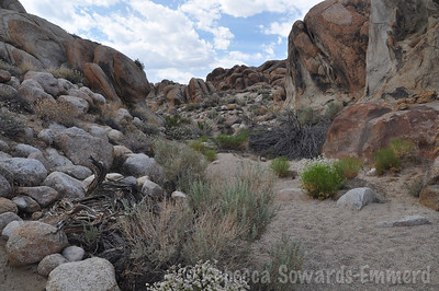 Walking through the alabama hills