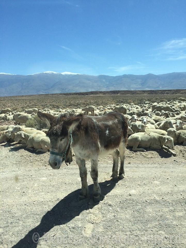 They even had donkeys. It was odd.