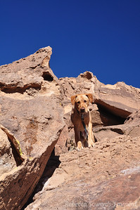 Poor B is leashed up while the rest of us climb. He just wanted to play!