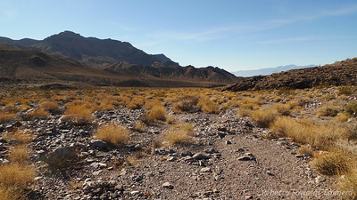 Heading up the open desert, this is looking back towards where we parked (cars not visible anymore)