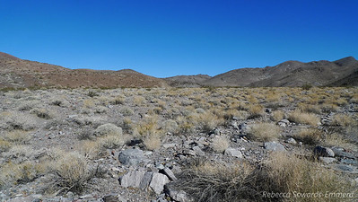 Open desert. We can't see the saddle we're heading towards yet, but we're following the path of what used to be an old road. It's all been washed out now and the best thing we've got to follow is coyote tracks (it seemed to be a thoroughfare for them).