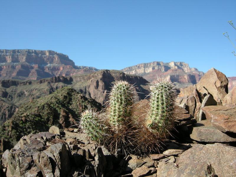 Cactus and South Rim