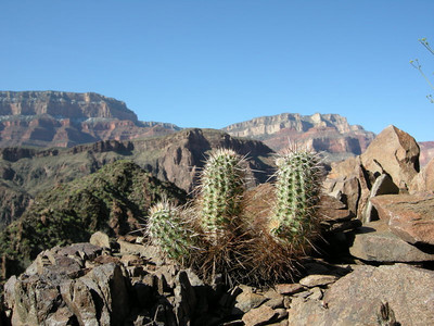 Cactus and South Rim