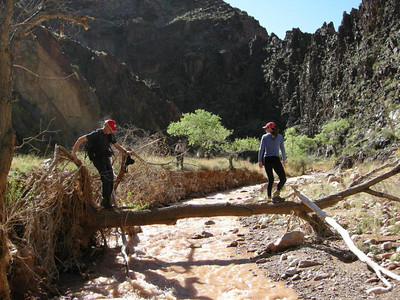 The only log crossing in the entire canyon