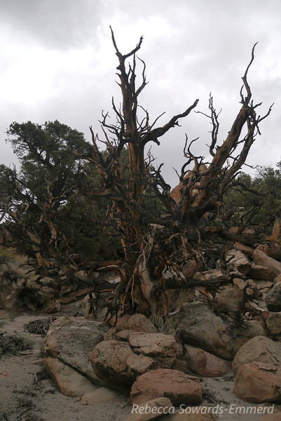 Gnarly trees.