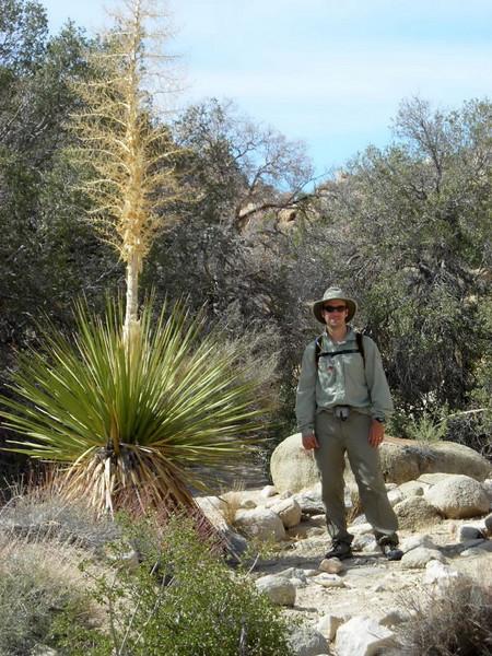 Blooming yucca and David
