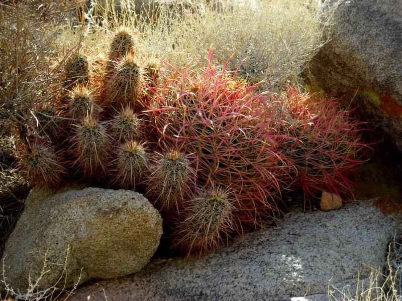 Pile o' cactus