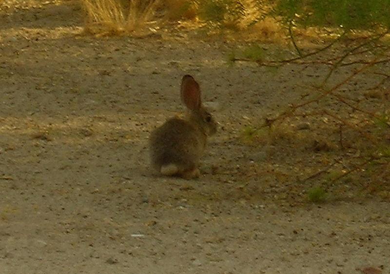 Bunnies everywhere!