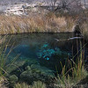 Each of these springs holds a unique species of pupfish.