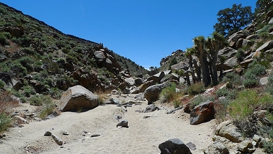 Centennial Canyon